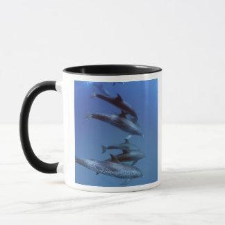 Atlantic spotted dolphins. Bimini, Bahamas. Mug