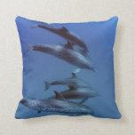 Atlantic spotted dolphins. Bimini, Bahamas. Throw Pillow
