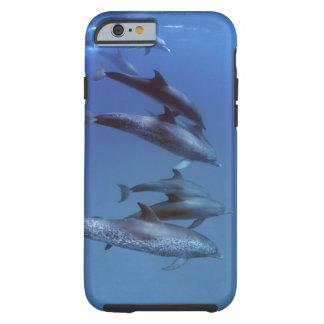 Atlantic spotted dolphins. Bimini, Bahamas. Tough iPhone 6 Case