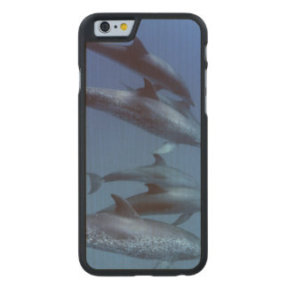 Atlantic spotted dolphins. Bimini, Bahamas. Carved® Maple iPhone 6 Slim Case