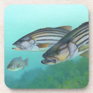 Atlantic Striped Bass Fish Morone Saxatilis Beverage Coaster
