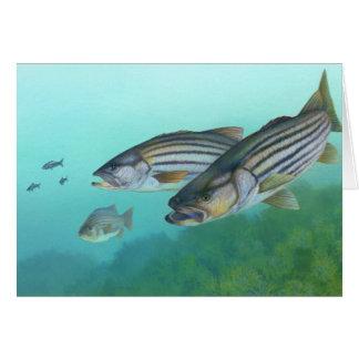 Atlantic Striped Bass Fish Morone Saxatilis Card