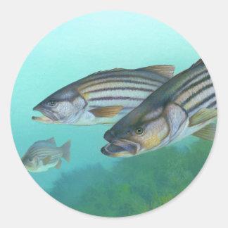Atlantic Striped Bass Fish Morone Saxatilis Classic Round Sticker