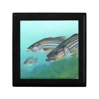 Atlantic Striped Bass Fish Morone Saxatilis Jewelry Box