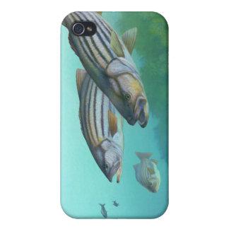 Atlantic Striped Bass Fish Morone Saxatilis iPhone 4 Cases