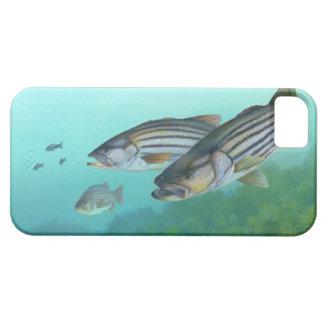 Atlantic Striped Bass Fish Morone Saxatilis iPhone SE/5/5s Case