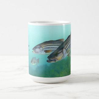 Atlantic Striped Bass Fish Morone Saxatilis Classic White Coffee Mug