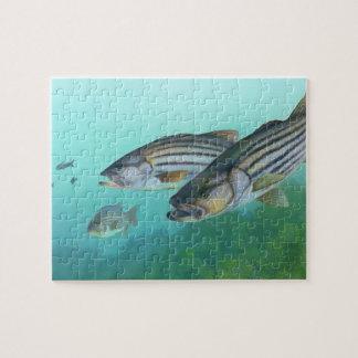 Atlantic Striped Bass Fish Morone Saxatilis Jigsaw Puzzles
