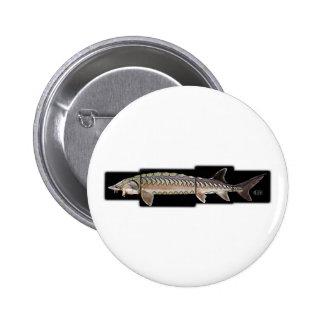 Atlantic Sturgeon - Acipenser oxyrinchus Buttons