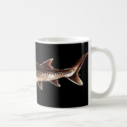 Atlantic Sturgeon - Acipenser oxyrinchus Coffee Mug