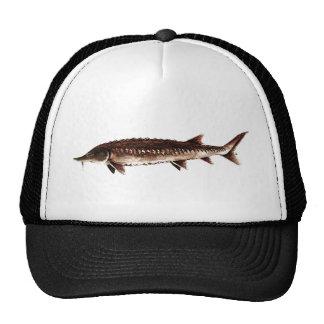 Atlantic Sturgeon - Acipenser oxyrinchus Hat