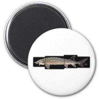 Atlantic Sturgeon - Acipenser oxyrinchus Refrigerator Magnets