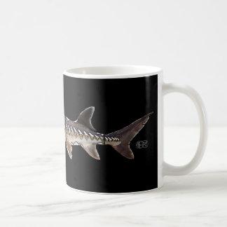 Atlantic Sturgeon - Acipenser oxyrinchus Mugs