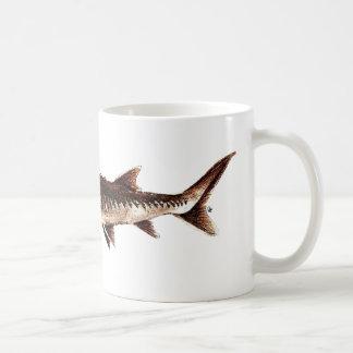 Atlantic Sturgeon - Acipenser oxyrinchus Mug