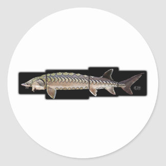 Atlantic Sturgeon - Acipenser oxyrinchus Round Stickers