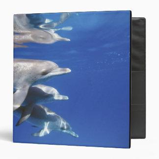 "Atlántico manchó delfínes. Bimini, Bahamas. 10 Carpeta 1 1/2"""