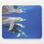 Atlántico manchó delfínes. Bimini, Bahamas. 10 Mouse Pad