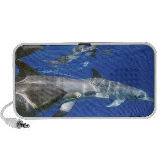 Atlántico manchó delfínes. Bimini, Bahamas. 11 Altavoz De Viaje