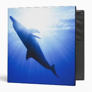 "Atlántico manchó delfínes. Bimini, Bahamas. 2 Carpeta 1 1/2"""
