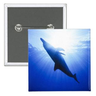 Atlántico manchó delfínes. Bimini, Bahamas. 2 Pin Cuadrada 5 Cm