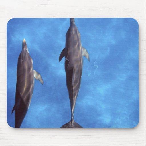 Atlántico manchó delfínes. Bimini, Bahamas. 3 Alfombrilla De Ratón