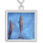 Atlántico manchó delfínes. Bimini, Bahamas. 3 Colgante Cuadrado
