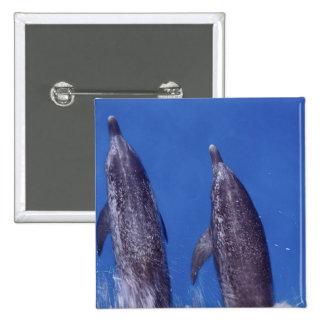 Atlántico manchó delfínes. Bimini, Bahamas. 4 Pin Cuadrada 5 Cm