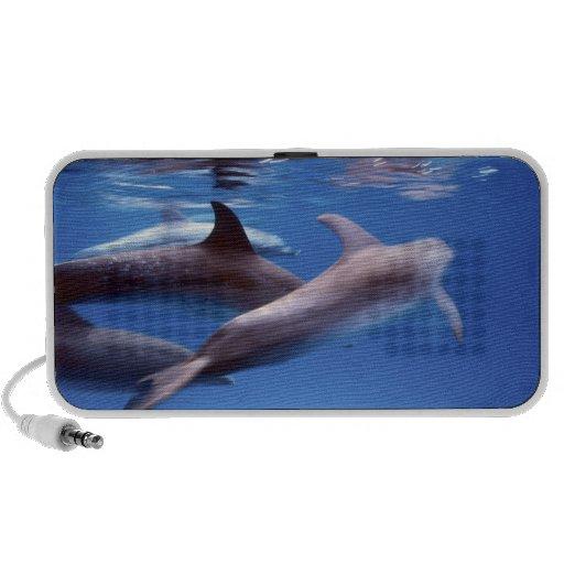 Atlántico manchó delfínes. Bimini, Bahamas. 6 iPod Altavoces