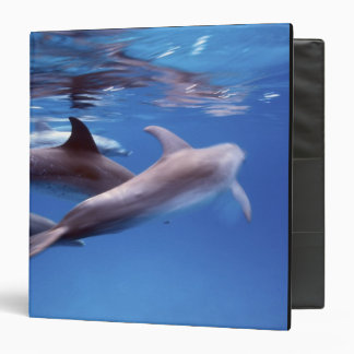 "Atlántico manchó delfínes. Bimini, Bahamas. 6 Carpeta 1 1/2"""