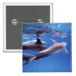 Atlántico manchó delfínes. Bimini, Bahamas. 6 Pin Cuadrada 5 Cm