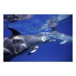 Atlántico manchó delfínes. Bimini, Bahamas Fotografía