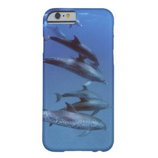 Atlántico manchó delfínes. Bimini, Bahamas Funda Para iPhone 6 Barely There