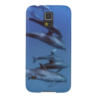Atlántico manchó delfínes. Bimini, Bahamas Funda De Galaxy S5