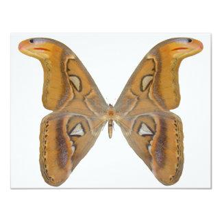 Atlas Butterfly Card