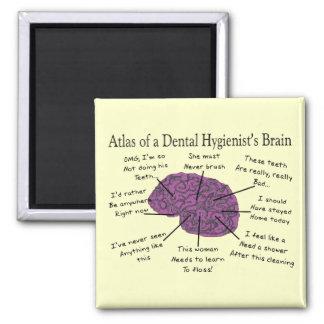 Atlas de un cerebro del higienista dental imán cuadrado