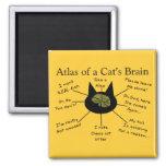 Atlas del cerebro de un gato imanes de nevera
