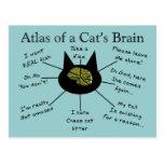 Atlas del cerebro de un gato tarjeta postal