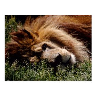 Atlas Lion Postcard
