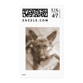 Atlas the Wonderdog Postage