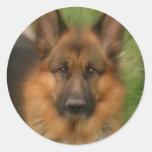 Atlas the Wonderdog Round Stickers