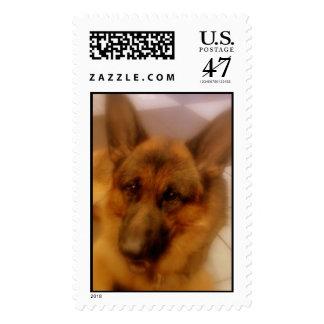Atlas the Wonderdog Stamp