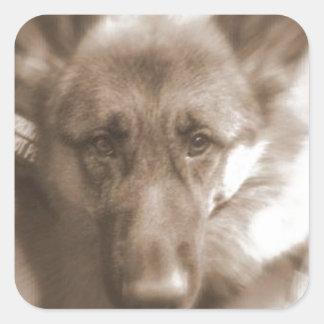 Atlas the Wonderdog Square Stickers