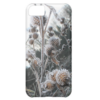 Atmospheric icy, frosty teasels in winter iPhone 5C case