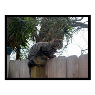 Atop the Fence Post Cards