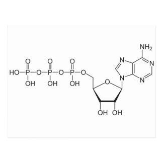 ATP molecule Postcard