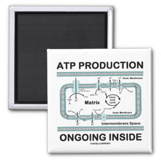 ATP Production Ongoing Inside Magnets