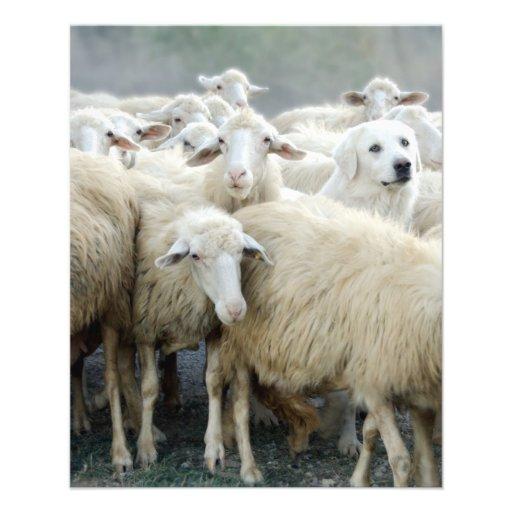 ¡Atrevimiento a ser diferente! Perro pastor que di Flyer Personalizado
