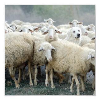 ¡Atrevimiento a ser diferente Perro pastor que di