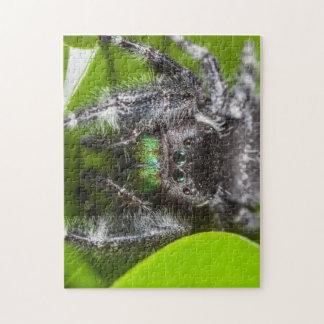 Atrevimiento de la araña de salto puzzles con fotos