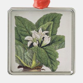 Atropa mandragora square metal christmas ornament